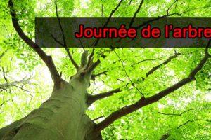 Journée_arbre1